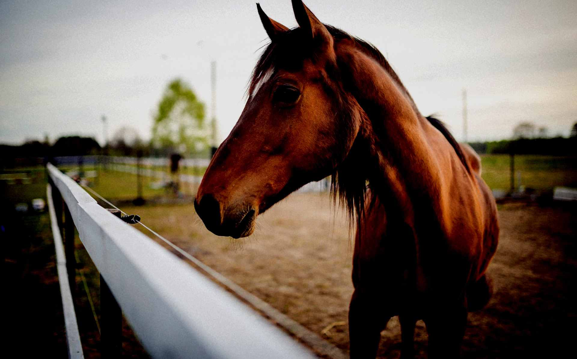 joomla-template-horse-s2